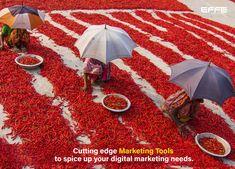 Successful Marketing Campaigns, Spice Company, Red Chilli, Creative Business, Harvest, Chili, Stuffed Peppers, Concept, Bright