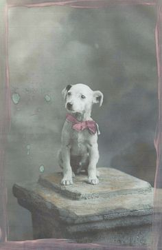Petit Lou Kids Art Project: vintage photo collection - www.petitloublog.com