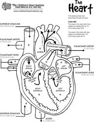 Awesome anatomy follow your heart worksheets anatomy and homeschool ccuart Image collections