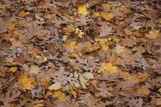 Leaves On Forest Floor Free Stock Photo - Public Domain Pictures Lawn Care Companies, Sustainable Environment, Motion Backgrounds, Forest Floor, Autumn Forest, Green Lawn, Stop Motion, View Image, Free Stock Photos