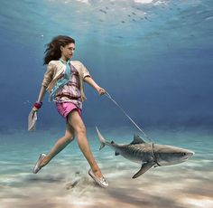 So what time of day do you walk your shark?