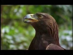 """On The Wings Of An Eagle-  John Denver   Beautiful video with scenes of the animated movie, """"Spirit Stallion of the Cimarron"""". Scenes of eagles, wolves, wild horses and John flying in his sky glider.  John was flying in his sky glider over the Pacific Ocean when he crashed into the ocean in 1997."""