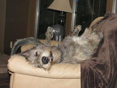 Irish Wolfhounds, Gentle Giant, Shelter Dogs, Scottie, Puppy Love, Animals And Pets, Celtic, Creatures, Puppies
