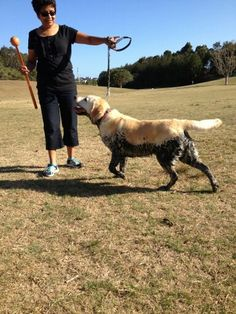 Wilma's #dogpark buddy needs a LeadaHose!