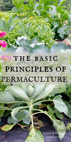 Permaculture Basics Permaculture Basics,Sustainability Getting started with Permaculture. The basics principles of permaculture and why it makes a great addition to any homestead or small farm. Organic Insecticide, Organic Fertilizer, Organic Pesticides, Organic Vegetables, Growing Vegetables, Yandere, Organic Gardening Tips, Vegetable Gardening, Permaculture Garden