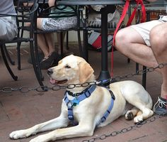 Searching for pet friendly dining? Start here!
