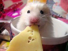 Zuckersüß: 10 winzig kleine Mäuse - Seite 1