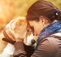 Como fazer um cachorro relaxar. Precisa relaxar seu cão porque nota que ele está nervoso ou estressado? Então convidamos você a continuar lendo este artigo. Os cães, assim como os humanos, também sofrem de estresse e nervosismo em d...