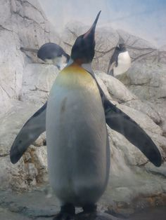 Indianapolis Zoo by Lenser Family, via Flickr