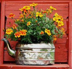 Got an old kettle? Time to upcycle into a planter like this one! ~ The Micro Gardener