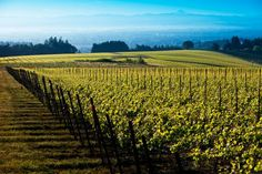 Burgundy's Drouhin family has doubled its vineyard land in Oregon after expanding into the Eola-Amity Hills area, rounding off a series of w...