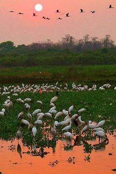 Pantanal, Mato Grosso, Brasil