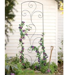 Garden Flourish Wrought Iron Tall Trellis,  http://www.plowhearth.com/garden-flourish-wrought-iron-tall-trellis.htm