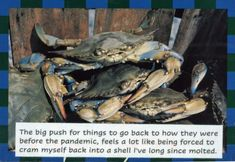 Sunday Secrets – PostSecret Post Secret, The Secret, Word To Your Mother, Staying Alive, Life Inspiration, Sunday, Feelings, Quote, Art