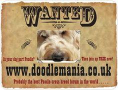 Doodle Mania Doodlemaniacouk On Pinterest - Custom car magnets uk