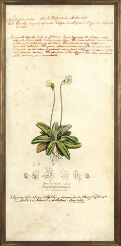 James Sowerby (1755-1822) collection