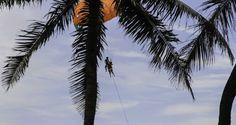 Parasailing at Patong Beach