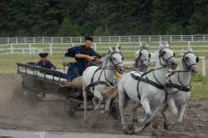 Bugac Puzsta - Horse show Show Horses, Hungary, Animal Kingdom, Nature, Animals, Naturaleza, Animales, Animaux, Animal