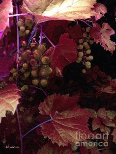 """""""The Blood of the Grape"""" ~ © 2015 RC deWinter ~ All Rights Reserved"""