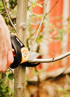 how to clean up your yard after winter
