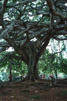 Botanical Gardens - Kandy - Sri Lanka