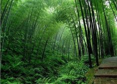If I owned property with some acreage I would definitely have a small bamboo forest with some Zen Statues and a few water features.