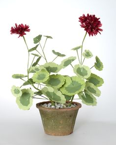Planted Geranium by The Green Vase