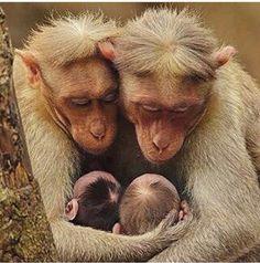 Van dieren kunnen mensen nog veel leren… Trouw blijven aan elkaar doorheen mooie en minder mooie momenten in het leven...