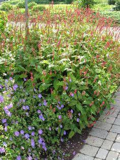 plantes pour sol argileux jardin pinterest comment. Black Bedroom Furniture Sets. Home Design Ideas