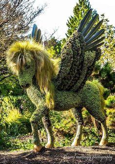 Pegasus at Imaginary Worlds int Atlanta Botanical Garden. Topiary Garden, Garden Art, Garden Design, Cacti Garden, Diy Garden, Atlanta Botanical Garden, Botanical Gardens, Amazing Gardens, Beautiful Gardens
