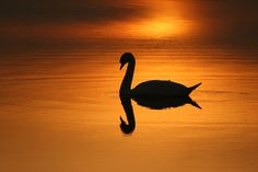 On Golden Pond 1 by n55ffc on Flickr.