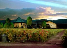 I miss Napa Valley; it's been 7 years!! Need to go back to Peju Winery. (Photo by Paul Bailey)