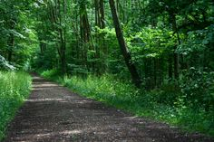 Forest Path, Forests, Paths, Beautiful Pictures, Country Roads, American, Woodland Forest, Pretty Pictures, Woods