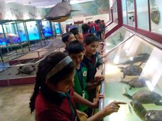 The students of Grade V went on a field trip totheShivajiChhatrapatiMaharajVastu Sangrahalaya formerly known as '' The Prince Of Wales Museum''. They saw a priceless collection of ancient Indian history. Various collections of the daggers, ancient coins, Mughal time's sarees, modern art fascinated them. Moreover, the  guide also explained the way they catch and preserve the animals which was informative and new for the students.