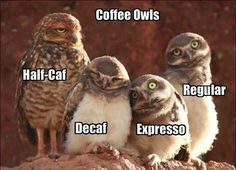 Coffee Owls . . .  LOL