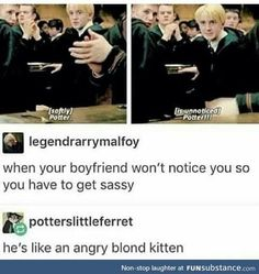 no drarry, I don't ship but angry blond kitten is by far the most accurate description of Draco i've ever heard Draco Harry Potter, Harry Potter Ships, Harry Potter Universal, Harry Potter Funny Tumblr, Harry James Potter, Must Be A Weasley, No Muggles, Yer A Wizard Harry, Nerd