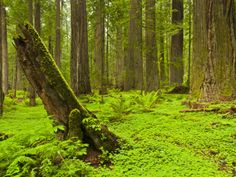 Forest Floor, Humboldt Redwood National Park, California, USA Photographic Print
