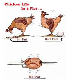 Chicken life in 3 pics.. lol
