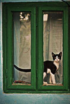 Detras de la ventana estaba mi gato, mirando lo que pasaba y pensando en Viriato...
