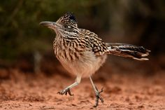Road Runner...running! | by Alex_Appleby