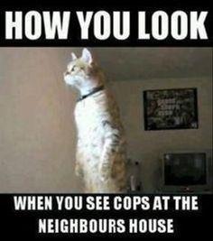 Cat, How you look!