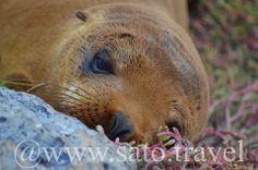 A sea lion taking a bit of a break.