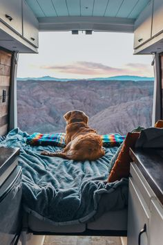 How To Van Life With A Dog How to live with a dog in a diy campervan conversion. Packing essentials for your road trip, how to find a sitter when visiting National Parks. Advice on keeping the temperature under control. Tips and tricks for doing adventure