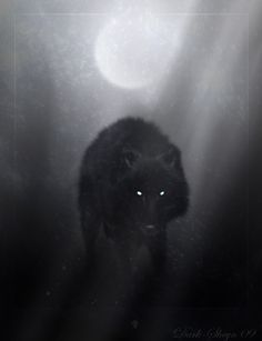 Wolf of winter night by ~Dark-Sheyn on deviantART