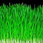 Les mauvaises herbes envahissent votre allée à la maison ? Nous avons une solution à vous proposer pour désherber facilement. Appliquez juste ce truc simple et gratuit pour désherber votre jardin san