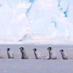 Cute Baby Animals, Animals And Pets, Funny Animals, Beautiful Birds, Animals Beautiful, Amazing Animal Pictures, Penguins And Polar Bears, Mundo Animal, Beautiful Creatures