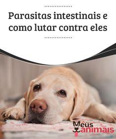 Parasitas intestinais e como lutar contra eles  #Parasitas intestinais podem passar #desapercebidos ou causar #gravestranstornos e, inclusive, podem ser transmitidos aos #humanos. #Saúde