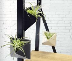 Trendy magnetic pots in classic colors. Features a hardy, easy to care for, air plants (Tillandsia). Patented magnetized design allows each pot to attach to any metal surface. Plant variety may vary b