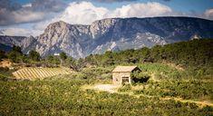 Visit To Saint-Chinian Languedoc-Roussillon : The Good Life France Canal Du Midi, Countryside, Life Is Good, Travel Destinations, Saints, France, Mountains, Places, Road Trip Destinations