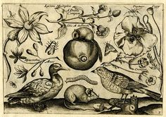 John Payne  A View of Creation  17th century